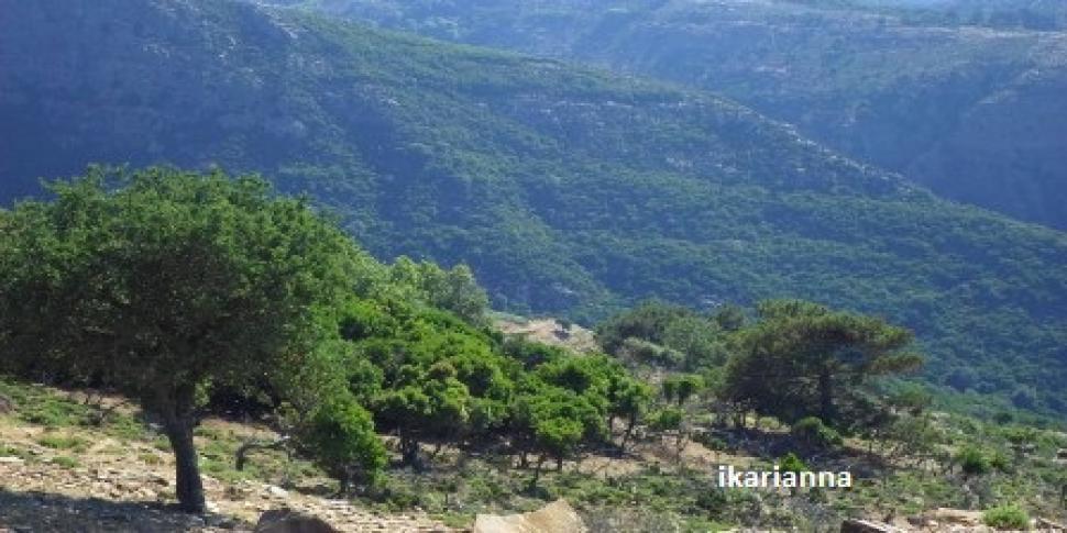 La Forêt  de Randi
