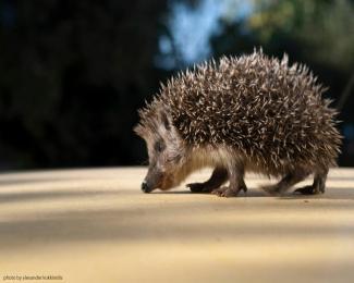 faune icarienne par Alexandros Kokkinidis